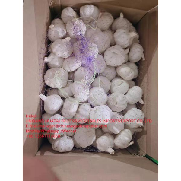 Pure white garlic with carton and meshbag package to EU Market #1 image