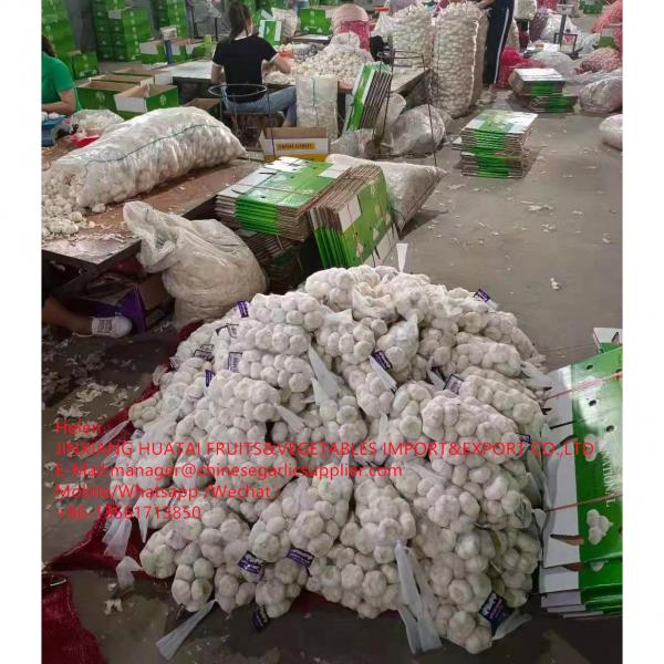 Pure white garlic with carton and meshbag package to EU Market #2 image