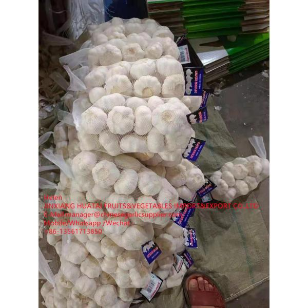 Pure white garlic with carton and meshbag package to EU Market #3 image