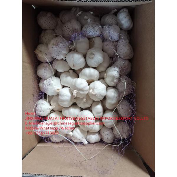 China Pure white garlic with carton and meshbag package to EU Market #1 image