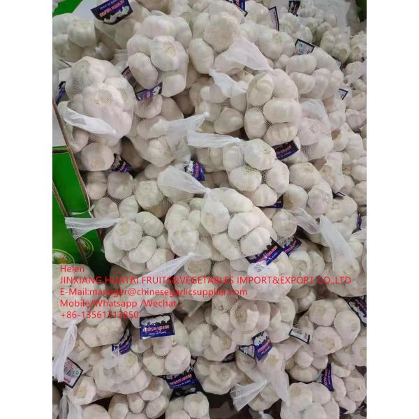 China Pure white garlic with carton and meshbag package to EU Market #3 image