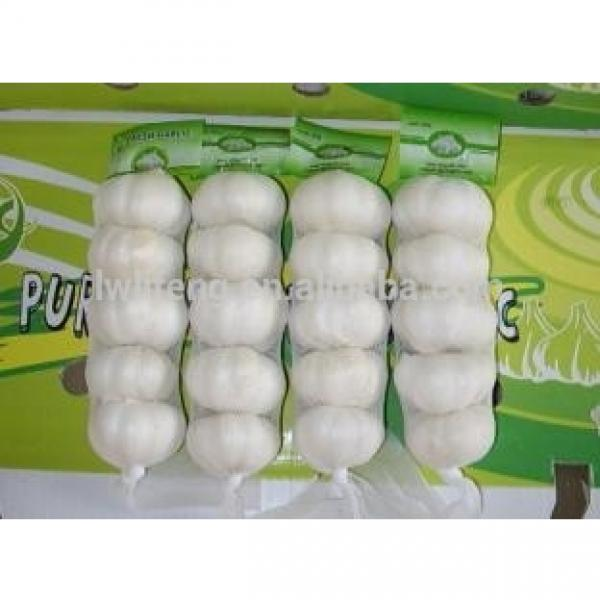 best manufacturer of White Garlic in China #1 image