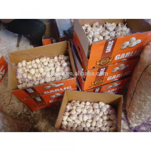 best manufacturer of White Garlic in China #2 image